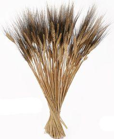 black bearded wheat - @Whitney Tawney