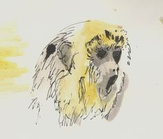 lion monkey by ~pill-boy on deviantART