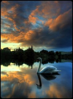 Indescribably Beautiful~  Swan Lake misty morning