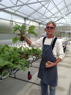 Owner and Chef Kirk Avondoglio picking fresh lettuce from the greenhouse at Perona Farms.