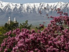 ~ Spring In Cache Valley w/ Logan LDS Temple in the Background ~ Utah....
