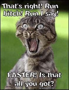 LMAO cat quotes, animal humor, funny pictures, funny cats, funni, funny photos, funny cat pics, funny pranks, cat photos