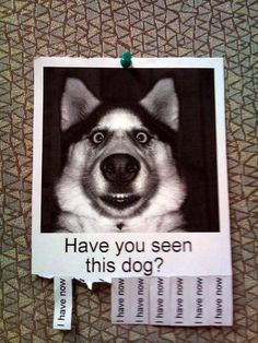 Humor dogs, funny pics, humour quotes, funny jokes, jokes funny, hilarious funny, hilarious animal pictures …For the best humour and hilarious jokes visit www.bestfunnyjokes4u.com/lol-funny-cat-pic/