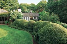 Even if you're surrounded by woods, keep your lawn, boxwoods, privet and hedges meticulously manicured.
