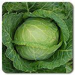Organic Copenhagen Green Cabbage