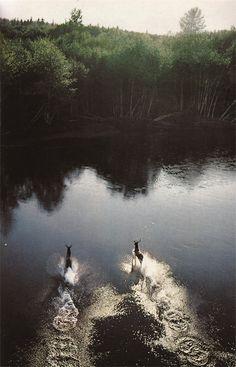 deer running to the woods