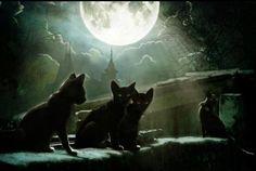 . cat art, kitten, halloween night, moon, friends, cat meow, black cats, kitti, kitty