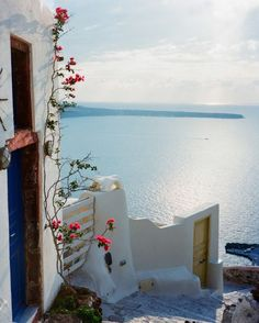 Santorini #travel #flowers #beauty