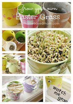 Grow your own Easter Grass @yourhomebasedmom.com