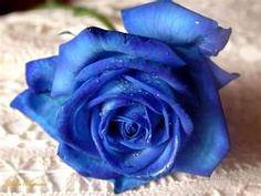 Blue roses for Blue.