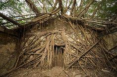 TREE HOUSE – tree house 3, The Green Life <3