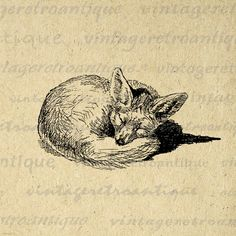 Printable Image Sleeping Fox Graphic Cute Download Animal Digital Vintage Clip Art. Vintage printable digital graphic download for iron on transfers, printing, tote bags, t-shirts, tea towels, and many other uses. Antique artwork. This image is large and high quality, size 8½ x 11 inches. Transparent background version included with every graphic.