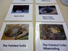animals in hibernation/not cards
