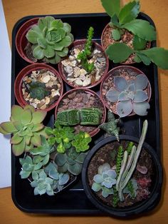 5 Tips To Hosting A Virtual Plant Swap