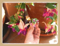 My little home: Fuchsia, step by step