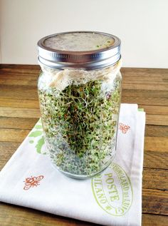 DIY Alfalfa Sprouts. A super fun projects for kids (or adults!).