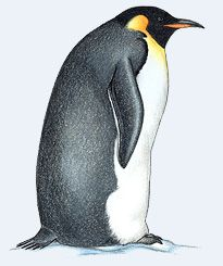 Great Penguin Facts