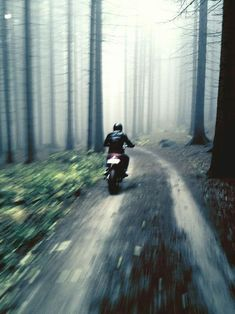 through the woods #motorcycle
