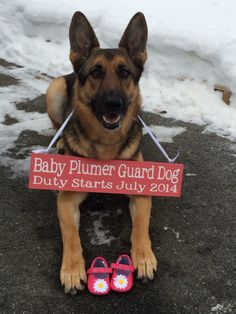 Custom Pregnancy Announcement Sign. Unique pregnancy reveal idea involving the family dog! https://www.etsy.com/listing/113983977/custom-pregnancy-announcement-sign-photo?ref=shop_home_active_1