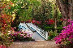 Magnolia Plantation, Charleston, SC