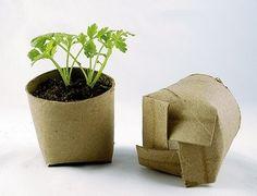 Starting seedlings in toilet paper rolls