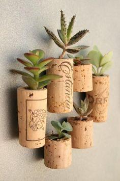succulents grown in wine corks. craft, plant holders, wine corks, winecork, succulent plants, planter, magnet, garden, mini