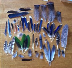 Blue feather collection...