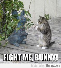anim, fight, funni, kitti cat, boxing