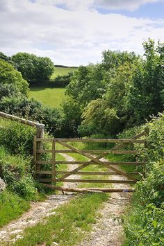 •♥• Cornish Lane in Summer | Cornwall