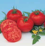 Moskvich (OG) mater  (Solanum lycopersicum)   from Johnny's Seeds