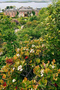 Bantry Flowers - County Cork, Ireland