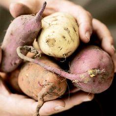 Growing Sweet Potatoes....