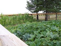 Five Newbie Gardening Tips for a Successful Season on http://www.stacymakescents.com