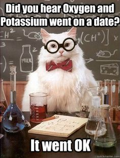 Chemistry cat tries out a new joke