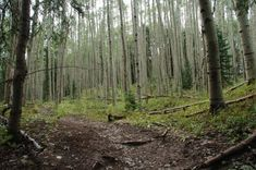 Hiking trail in Aspen Grove in Pagosa Springs, CO#Repin By:Pinterest++ for iPad#