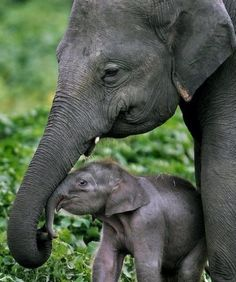 **Baby elephant and his mom
