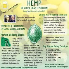 Are you including HEMP in your diet? Hemp is LOADED with nutrients – vitamins, minerals, antioxidants, fibre, and alkaline chlorophyll. Hemp is the CLOSEST PLANT SOURCE to our own human amino acid profile. The amino acid, EDESTIN, present only in hemp is considered an essential part of DNA. So, it is very important to include in any healthy eating regime. hemp, diet, weight loss, protein shakes, amino acids, healthy eating, plants, seeds, healthy bodies