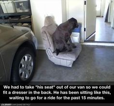 Awww the poor dog
