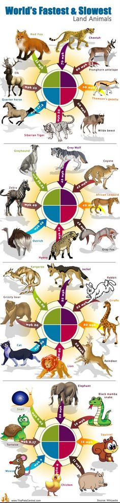 Fastest and Slowest Animals - Infographic