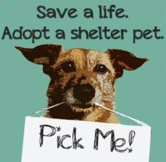 Adopt, shelter pets are the best!