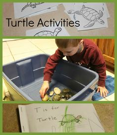 Turtle Activities for Preschoolers