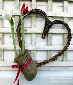 DIY ~ Amaryllis Heart Wreath in bloom http://ourfairfieldhomeandgarden.com/diy-amaryllis-heart-wreath/