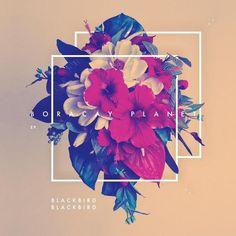 album covers, graphic design, planets, boracay planet, geometric shapes, art, blackbird blackbird, flower, blackbirdblackbird