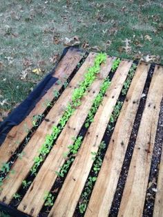 Is the pallet you're reusing safe to grow food in? Find out in this article from University of Illinois Extension.