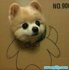 Am I Cute? #humor #lol #funny