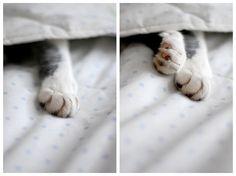{morning paws}
