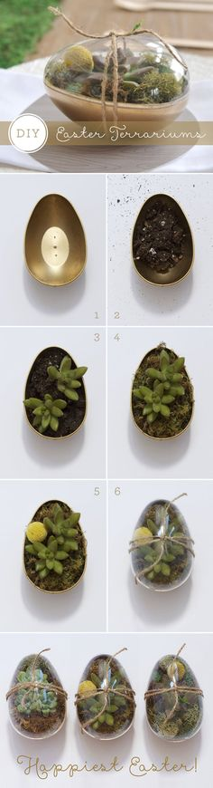 DIY_easter_gold_eggs_succulents