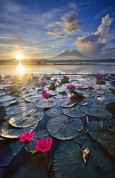 Sunrise over lily pads and mountains