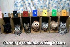 Cat Racing