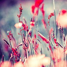 Hermosas fotografías artísticas de flores por Iwona Drozda-Sibeijn #photoart